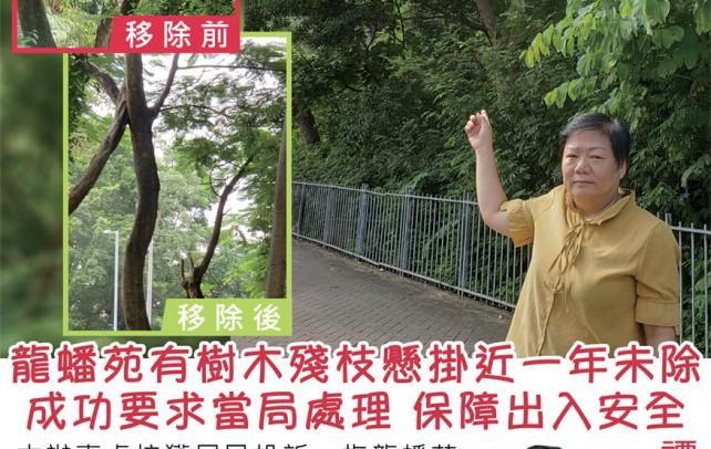 龍蟠苑有樹木殘枝懸掛近一年未除 成功爭取當局處理 保障出入安全