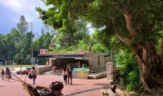 2020年10月01日 港鐵站出口過長樹木