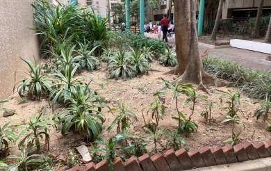 2021年04月20日 龍蟠苑商場旁的遊樂場的草叢有老鼠